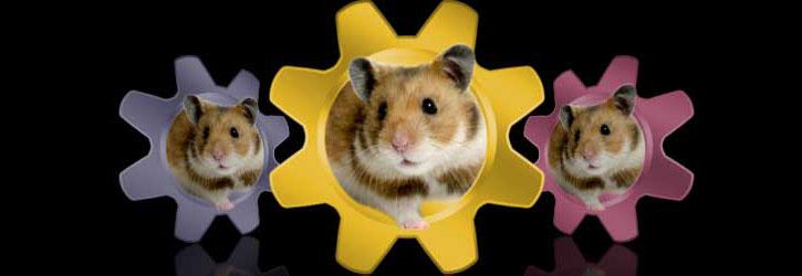 Illustrator Hamster