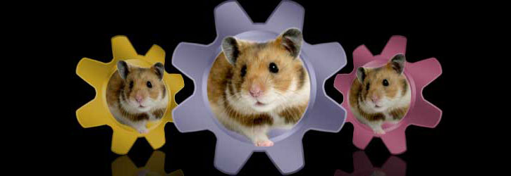 XPress Hamster